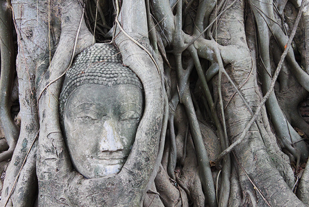 Boedha hoofd bedekt met wortels van een boom in Ayutthaya