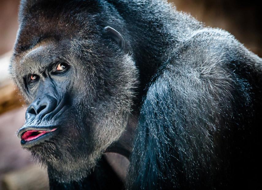 Kusje? Gemaakt in een dierentuin in Tsjechie © Alex Bykov