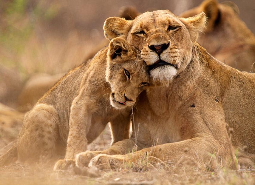 Onvoorwaardelijke moederliefde in Zuid-Afrika © Thomas Retterath